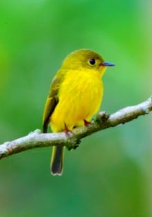 Indonesia Birding Tour visiting Tangkoko Nature Reserve