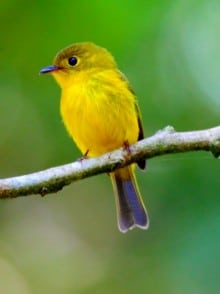 Birding Tour in Tangkoko