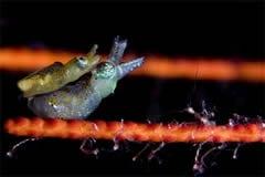 Wakatobi Fishes