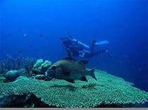 Wakatobi Underwater