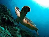 Wakatobi Turtles
