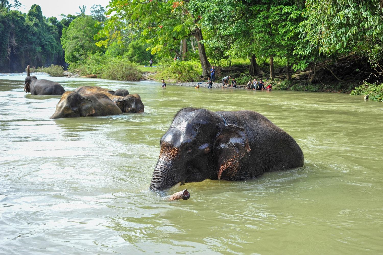 Elephant Gunung Leuser Tour